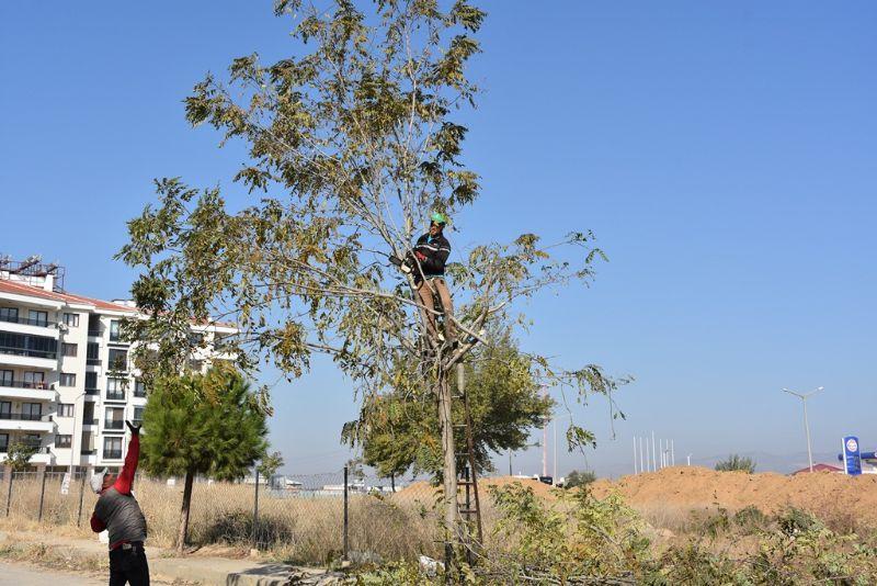 Ağaç Budama  İşlemleri Tüm Yıl Boyunca Aralıksız  Devam  Ediyor