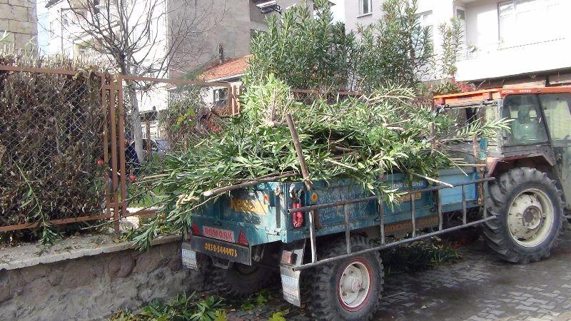 Alaşehir Belediyesi'ne Bağlı Ekiplerce İlçe Merkezindeki Ağaçların Bakım ve Budama Çalışmaları Devam Ediyor