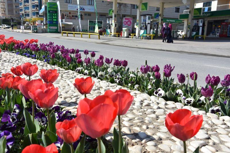 Alaşehir\'de Laleler Çiçek Açtı