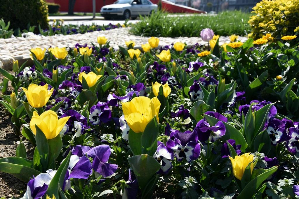 Bahar Çiçekleri Alaşehir'e Renk  Kattı