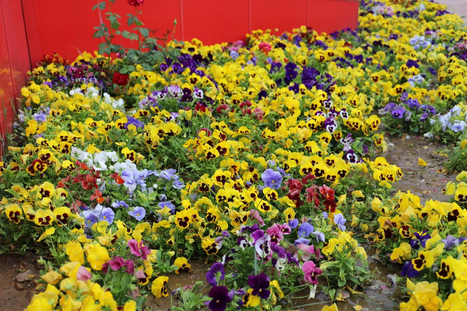 Kendi Seramızda Ürettiğimiz Çiçekler Toprakla Buluştu