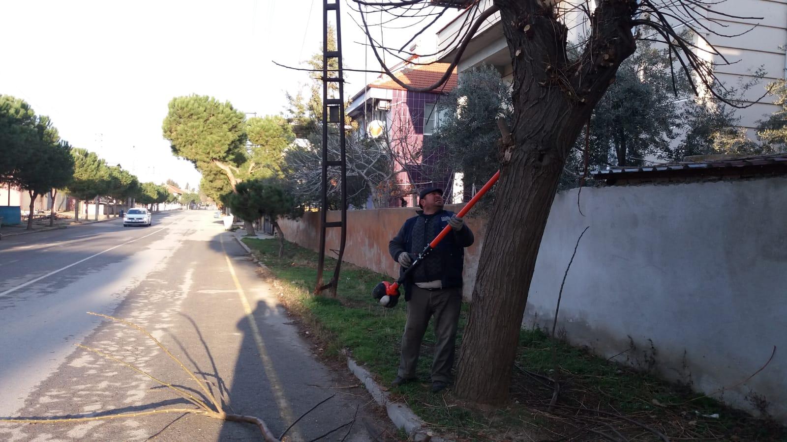 Killik Mahallemizde Ağaçlandırma  ve Budama Çalışmaları Devam Ediyor