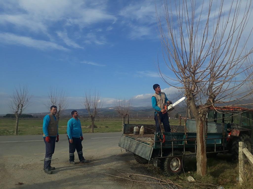 Park Ve Bahçeler Müdürlüğünden Hummalı Budama Çalışması