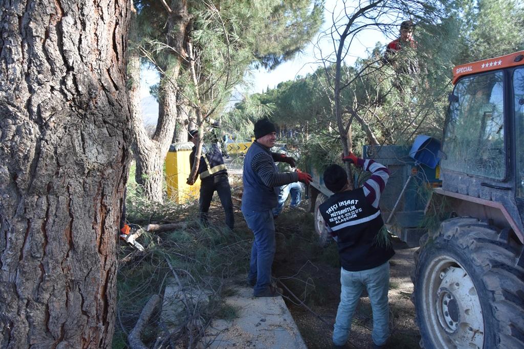 Park ve Bahçelerden Ağaç Budama Çalışmaları