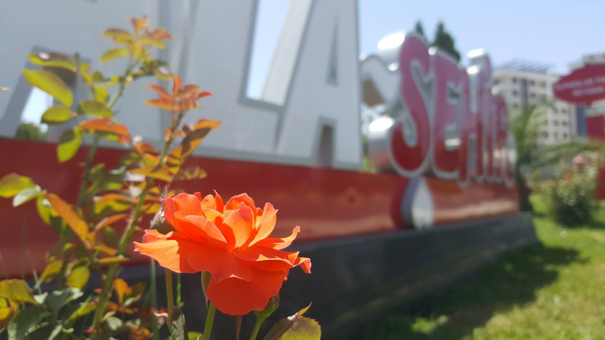 Yaz Çiçekleri Alaşehir'i Renklendiriyor