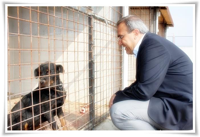 Sokak Hayvanları Geçici Barınağı Açıldı
